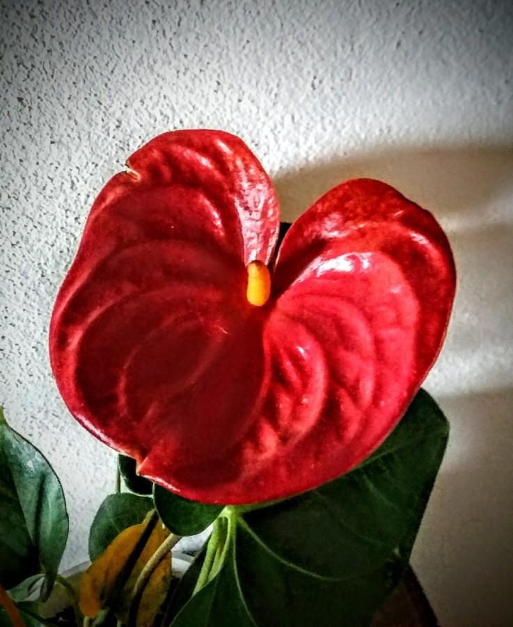 La vie en rose: elogio alfemminile
