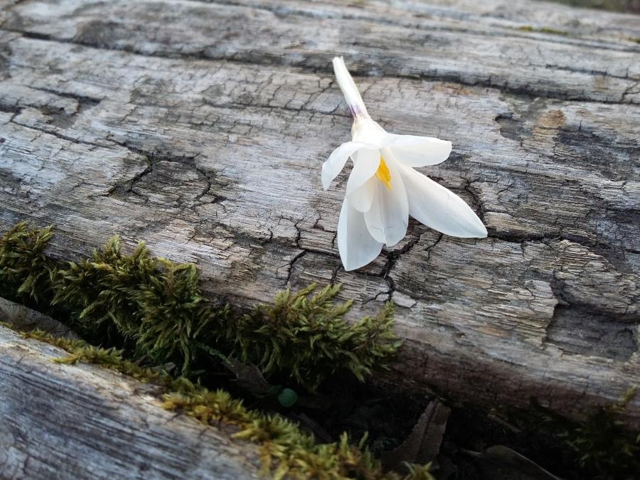 Benvenuto in primavera